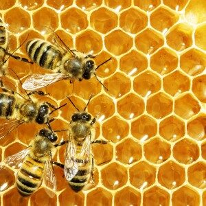 Medicines from the Beehive